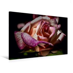 Premium Textil-Leinwand 120 cm x 80 cm quer Rose élégant