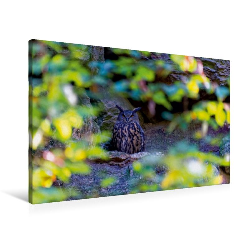 Premium Textil-Leinwand 90 cm x 60 cm quer Waldkauz im Tierfreig - zum Schließen ins Bild klicken