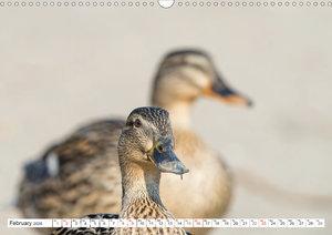 Emotional Moments: Wild Ducks. / UK-Version