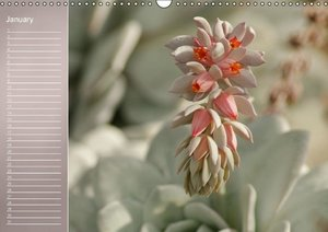 Delicate Beauties - Magnificent Flowers (Wall Calendar perpetual