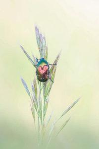 Premium Textil-Leinwand 30 cm x 45 cm hoch farbenprächtige Insek