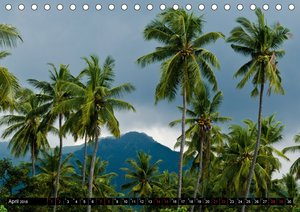 Tropenfeeling - Fernwehbaum Kokospalme