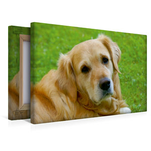 Premium Textil-Leinwand 45 cm x 30 cm quer Hundeportrait - Golde