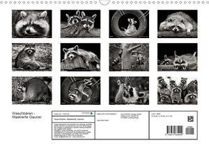Waschbären - Maskierte Gauner