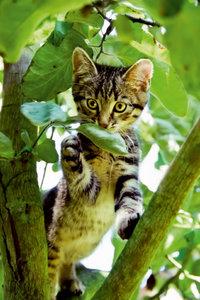 Premium Textil-Leinwand 50 cm x 75 cm hoch Niedliches Katzenkind