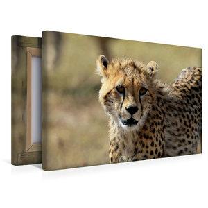 Premium Textil-Leinwand 45 cm x 30 cm quer Gepardin Malaika