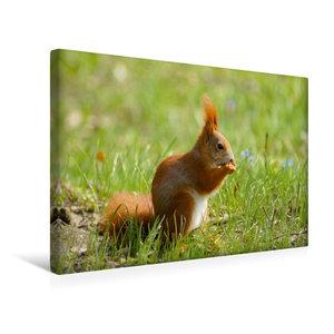 Premium Textil-Leinwand 45 cm x 30 cm quer Süßes Eichhörnchen in