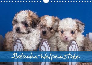 Bolonka Welpenstube (Wandkalender 2019 DIN A4 quer)