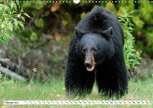 Alaskas Tierwelt - Paradies im Norden (Wandkalender 2019 DIN A3