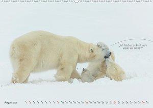 Emotionale Momente: Eisbären - ganz menschlich gesehen.