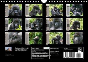 Berggorillas - die sanften Riesen (Wandkalender 2019 DIN A4 quer