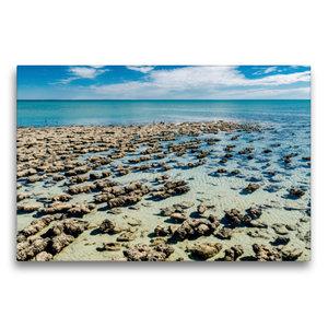 Premium Textil-Leinwand 75 cm x 50 cm quer Stromatolithen