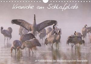 Kraniche am Schlafplatz - im Naturparadies der Mecklenburgischen