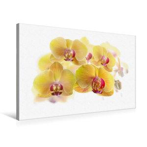Premium Textil-Leinwand 75 cm x 50 cm quer Phalaenopsis Orchidee