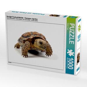 Gesägte Flachschildkröte - Homopus signatus 1000 Teile Puzzle qu