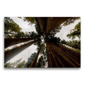 Premium Textil-Leinwand 75 cm x 50 cm quer Sequoia Nationalpark,
