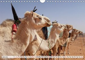 Lamas und Co. Familie der Kameliden (Wandkalender 2019 DIN A4 qu