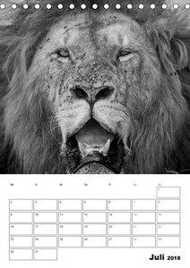 FineArt in Black and White: Der König der Löwen