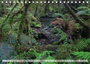 Neuseeland - Wilde Wälder (Tischkalender 2019 DIN A5 quer)