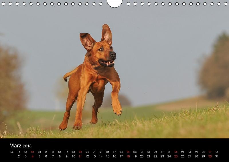 Hunde - Treue Freunde für´s Leben - zum Schließen ins Bild klicken