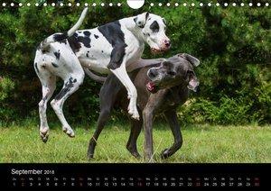 Hunde - Treue Freunde für´s Leben