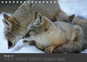 Tierpark-Gera (Tischkalender 2019 DIN A5 quer)