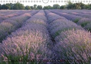 Lavendel. Der Duft der Provence