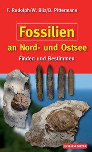 Fossilien an Nord- und Ostsee