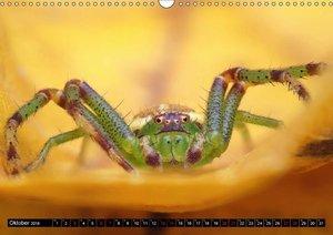 Faszination Makrofotografie: Spinnen (Wandkalender 2018 DIN A3 q