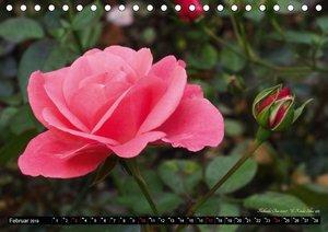 Die Namen der Rosen (Tischkalender 2019 DIN A5 quer)