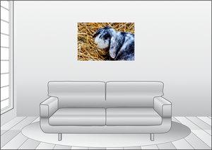 Premium Textil-Leinwand 90 cm x 60 cm quer Widder Zwergkaninchen