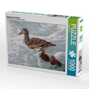 Eiderente mit Küken 1000 Teile Puzzle quer