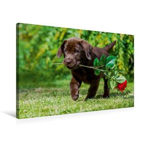 Premium Textil-Leinwand 75 cm x 50 cm quer Labrador Retriever -