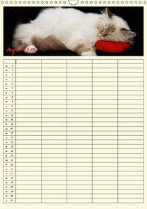 Zauberhafte Katzen - Familienplaner (Wandkalender 2019 DIN A3 ho