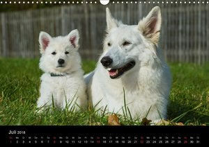 Weißer Schweizer Schäferhund - Ein Tag im Leben einer Hundefamil