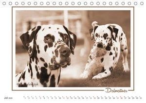 Farbenspiel der Hunderassen