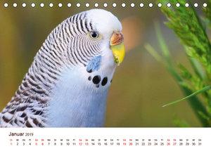 Wellensittiche - der NEUE Kalender (Tischkalender 2019 DIN A5 qu
