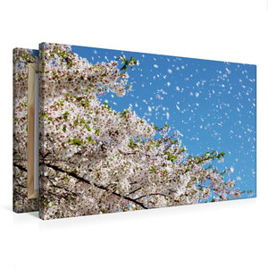 Premium Textil-Leinwand 75 cm x 50 cm quer Wind trägt Kirschblüt