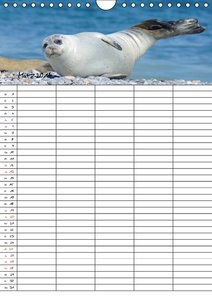 Robben Familienplaner (Wandkalender 2016 DIN A4 hoch)