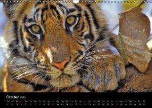 Wild Tigers 2015 (Wall Calendar 2015 DIN A3 Landscape)