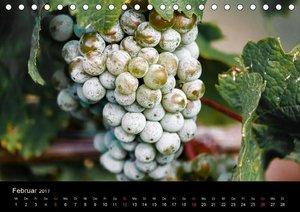 Rheingau - Riesling Trauben (Tischkalender 2017 DIN A5 quer)