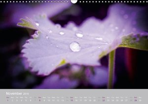 Tenderness of nature (Wall Calendar 2015 DIN A3 Landscape)