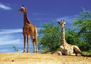 Namibia - Tiere und Landschaften (Posterbuch DIN A3 quer)