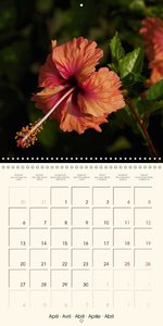 Delicate Beauties - Hibiscus Flowers in Magnificent Colors (Wall