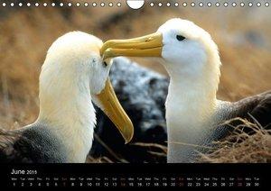 Galapagos Animals (Wall Calendar 2015 DIN A4 Landscape)