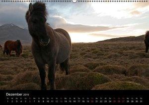 Gilbert, P: Pferde Islands 2105 (Wandkalender 2015 DIN A2 qu