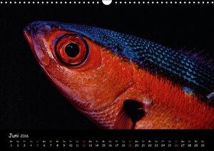 Die Welt unter Wasser (Wandkalender 2016 DIN A3 quer)