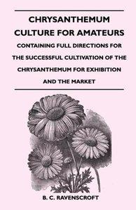 Chrysanthemum Culture for Amateurs