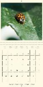 The insect world (Wall Calendar 2015 300 &times 300 mm Square)