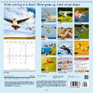 Birds landing: What goes up must come down (Wall Calendar 2015 3